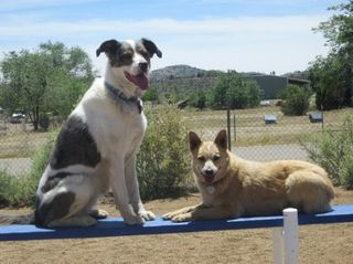 Agility - Dog Training Prescott