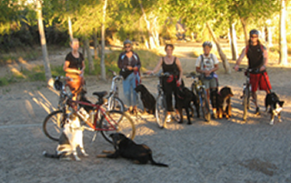 Bike Dawgs - Dog Training Prescott