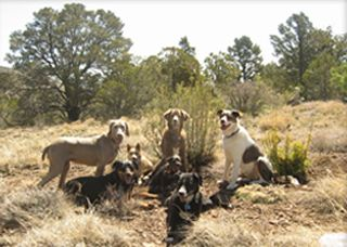 Classes and Programs - Dog Training Prescott